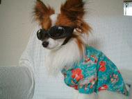 楽しい犬生活-d_030518.jpg