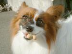楽しい犬生活-d_030912.jpg