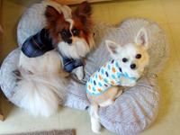 楽しい犬生活-p0416_04.jpg