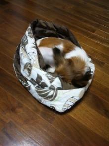 楽しい犬生活-091006.jpg